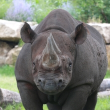 Team SCZ - Black Rhino's avatar